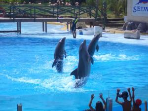 Selwo Marina Dolphinarium - Hotel Angela Fuengirola